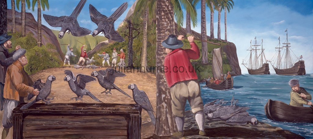 Catching Thirioux's Grey Parrots