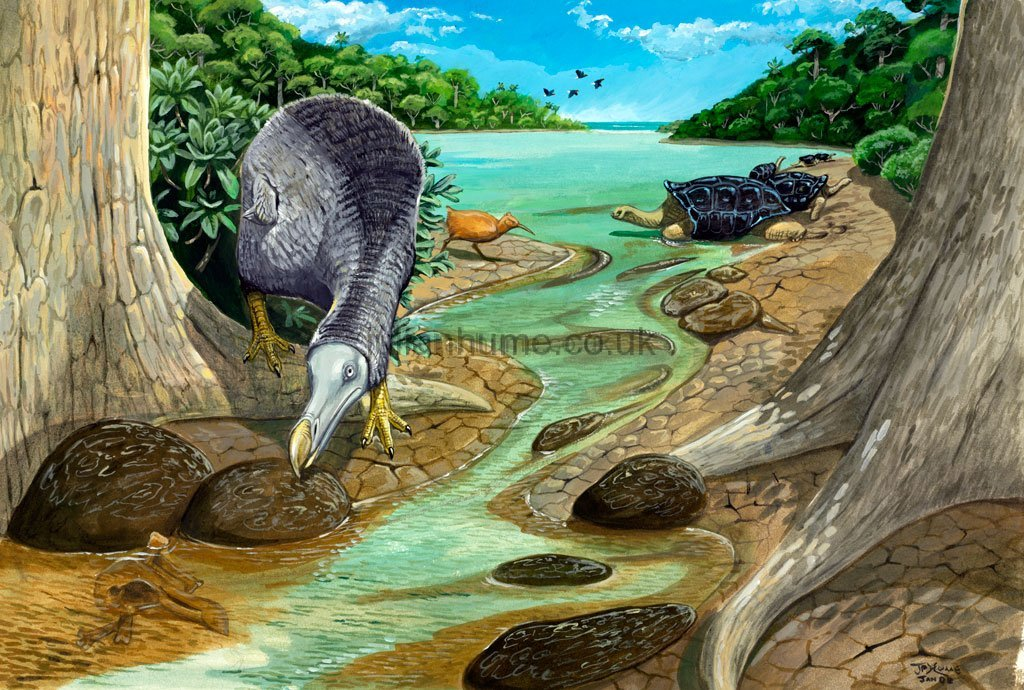 Rare Species Of Birds Artwork – Julian Hum...