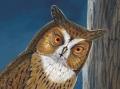 Mauritius Lizard-owl