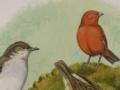Oahu Birds
