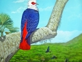 Rodrigues Blue Pigeon