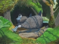 Kauai Mole Duck