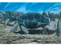 Rodrigues Tortoise & Leguat's Rail