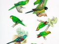 Extinct Parrots 1