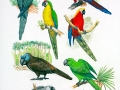 Extinct Parrots 2