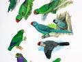 Extinct Parrots 3