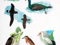 Extinct Water Birds