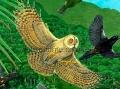 Kauai Owl Attack