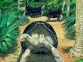 Mauritius Saddleback Tortoise