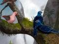 Reunion Blue & Pink Pigeons