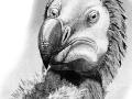 Dodo Heads drawing